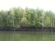 Mangrove Swamp, Langkawi