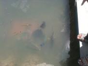 Fish Farm, Langkawi Mangrove Tour