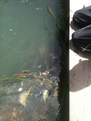 2nd Fish Farm, Langkawi Mangrove Tour
