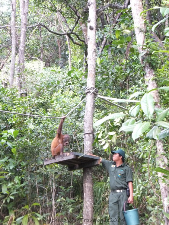 Shangri-La's Nature Reserve- Orang Utan Feeding area