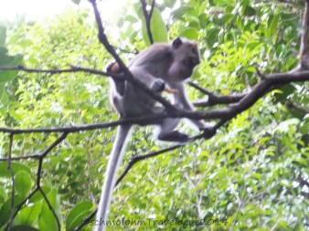 Shangri-La's Nature Reserve - Macaque chill & eat