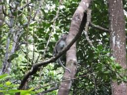 Shangri-La's Nature Reserve - Macaque
