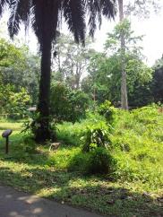 Pulau Ubin Monkeys