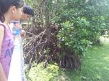 Pulau Ubin Chek Jawa Mangrove - Observing