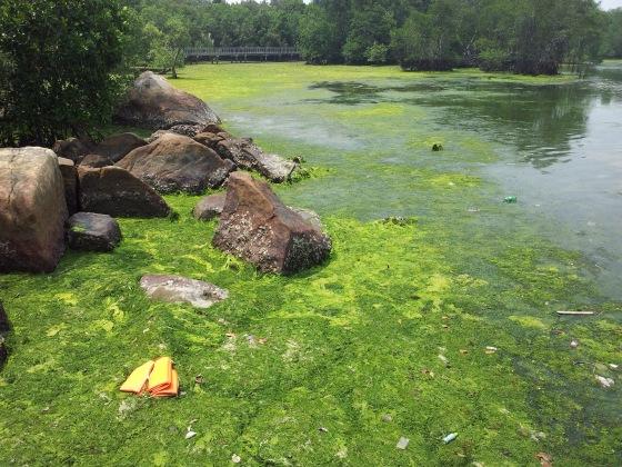 Pulau Ubin Chek Jawa Mangrove