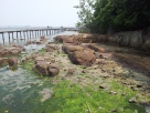 Pulau Ubin Chek Jawa Mangrove Boardwalk