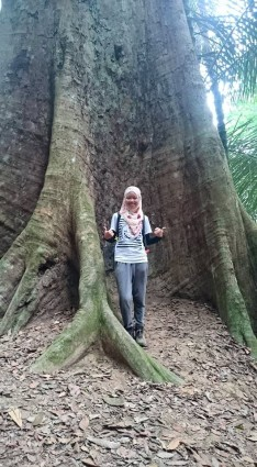 Gunung Lambak 1 day trip hike with Singapore Trekking Group - The Big Tree in Gunung Lambak