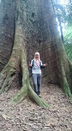Gunung Lambak 1 day trip hike with Singapore Trekking Group - The Big Tree in Gunung Lambak