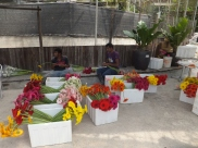Cameron Highlands Butterfly Farm - Workers arranging Gerberas Flowers