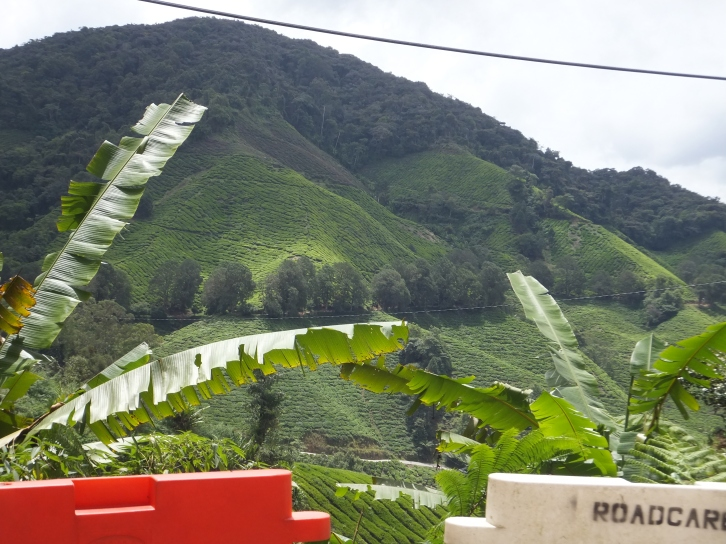 View of Sungei Palas Boh Tea Centre as you drive up