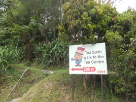 200m to Sungei Palas BOH Tea Centre from carpark