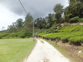 Route to Sungei Palas BOH Tea Centre