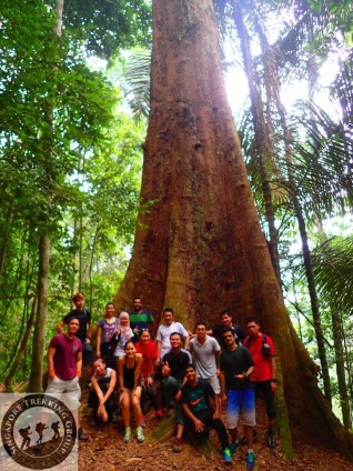 Gunung Lambak 1 day trip hike with Singapore Trekking Group - Group Photo with The Big Tree in Gunung Lambak
