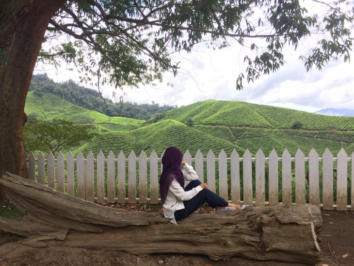 Mesmerized by Sungei Palas Boh Tea Centre