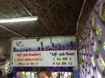 Cameron Lavender Garden strawberry and flower self-pick prices