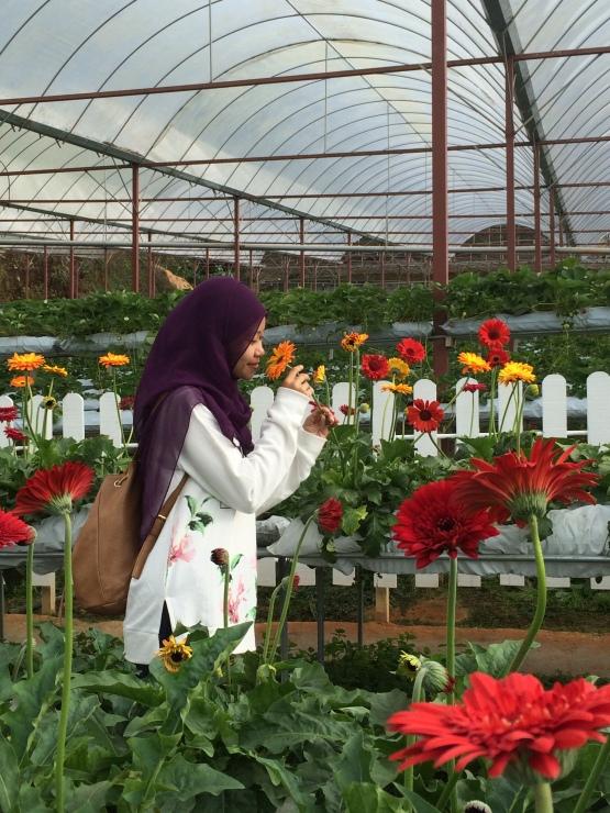 Cameron Lavender Garden - Loving the flowers