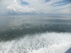 Labuan to Sipitang Speedboat - Oil Residue