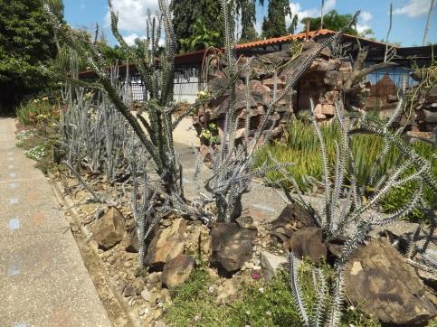 Sabah Agriculture Park - Cactus Area My favourite