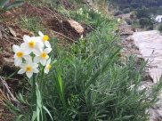 Seaview Faralya Butik Otel Planted Flowers