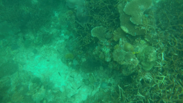 DSD at TARP, Sabah with Diverse Borneo More Corals